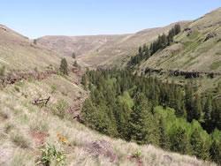 Asotin Creek - photo WDFW