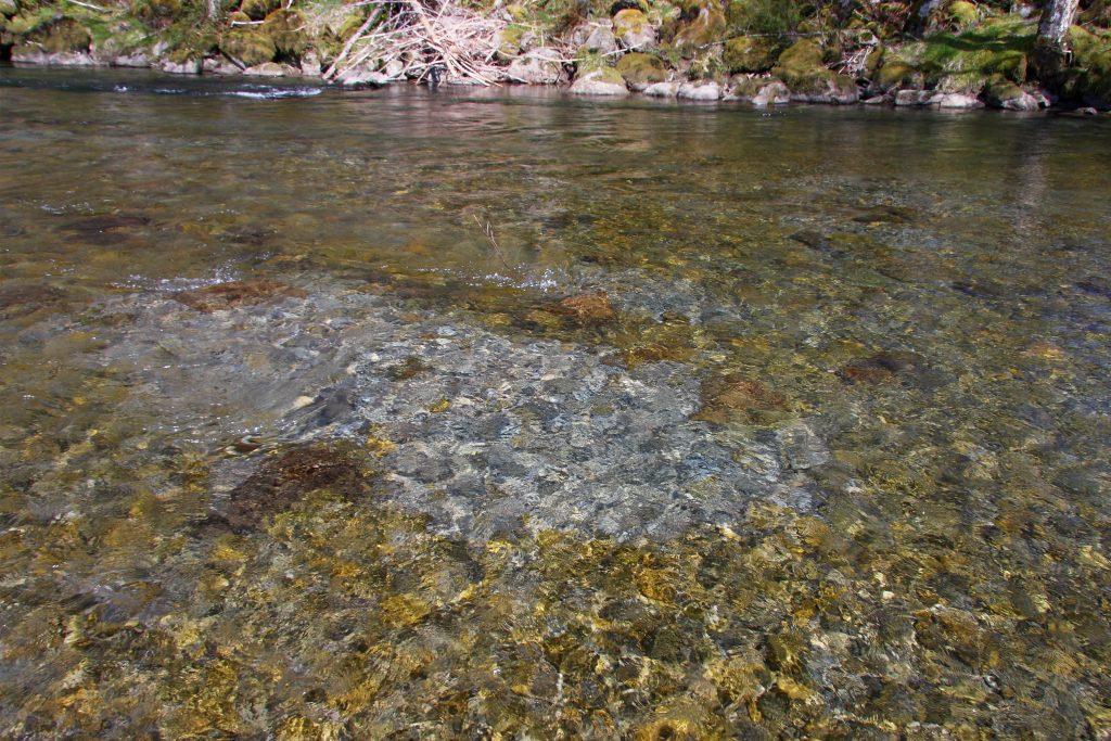 Redd in Quillayute River basin, John McMillan.